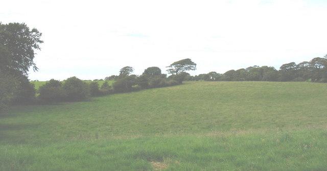 View across pasture land north of Coed Plas Llanddyfnan