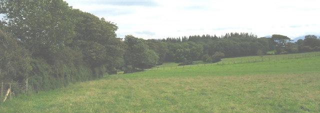 Coed Plas Llanddyfnan Woods