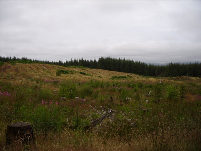 Forest Clearing on Garwachie Moor