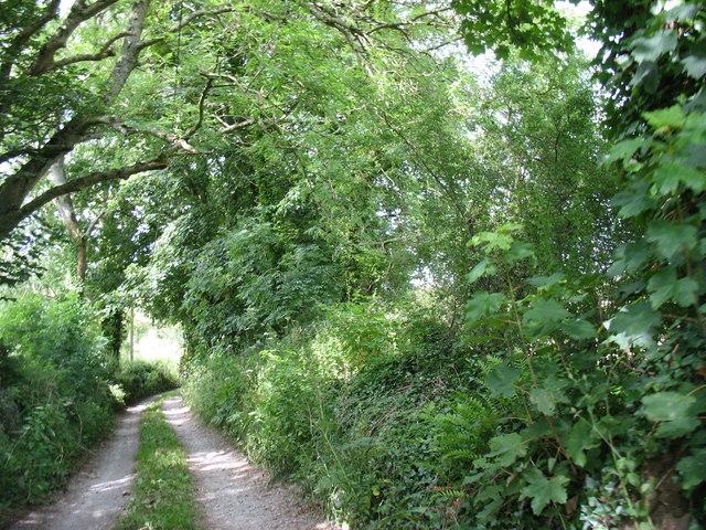 Track north of Bryn Poeth