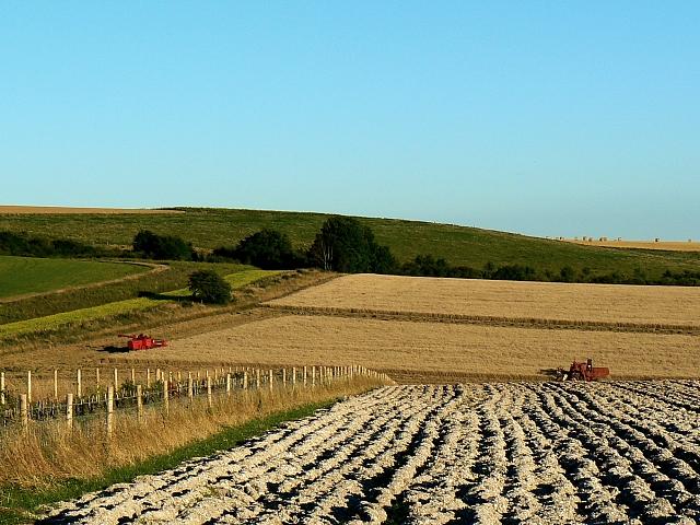 Farmland and harvesting, south of Easton Royal