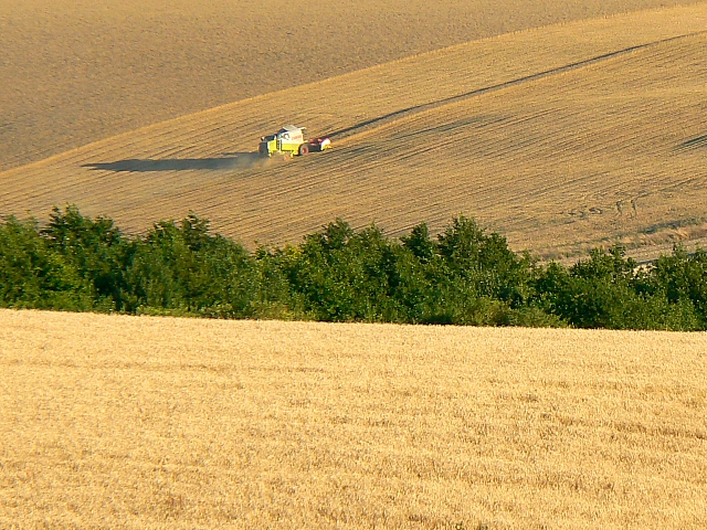 Harvesting, south of Easton Royal