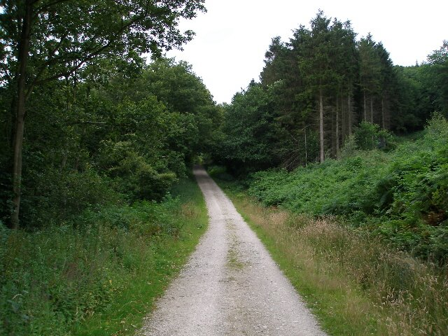 Forestry road in Great Cockerdale Wood
