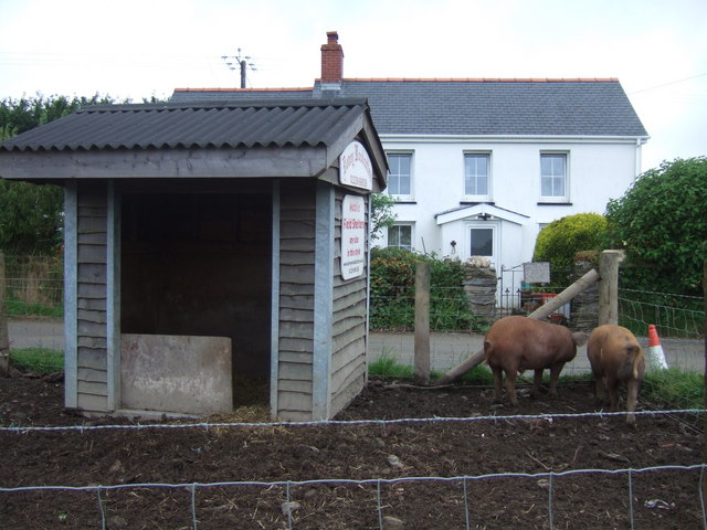 Pigs on county boundary