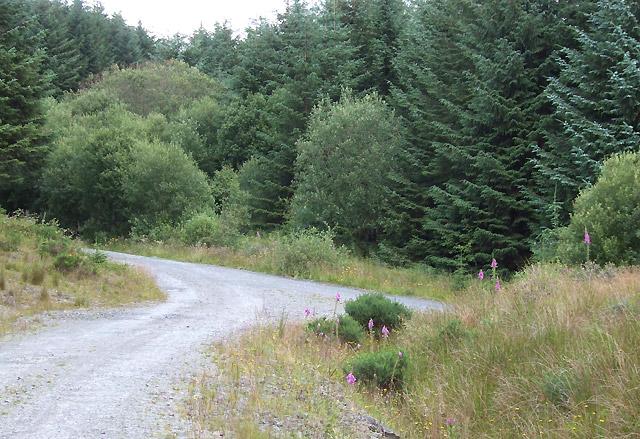 Forestry Road near Bryn Carregog, Ceredigion