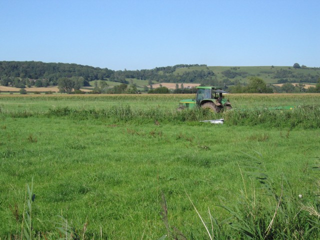 Cutting for silage