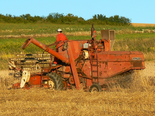 Harvesting wheat, south of Easton Royal