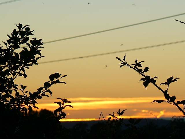 Brambles, flies and power lines, south of Easton Royal