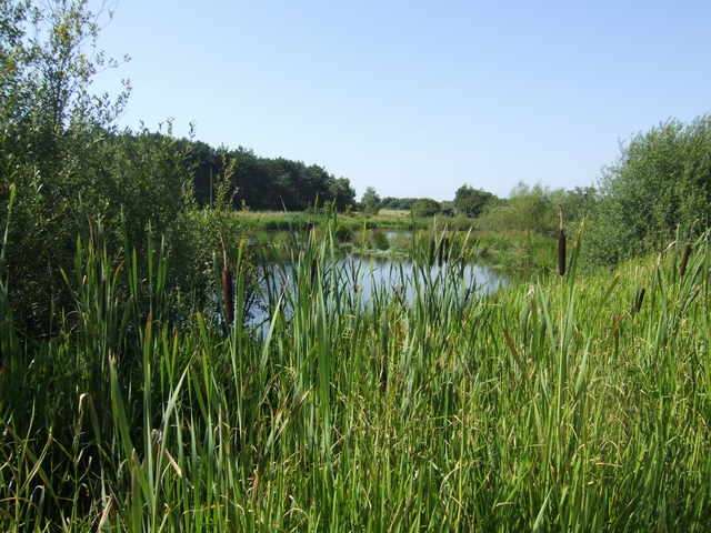 Pool on Pelsall Common North Nature Reserve