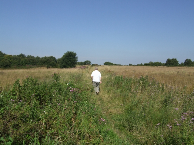 Across the Pelsall Common North Nature Reserve