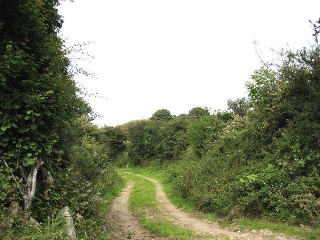 Track leading north from Fagwyr Fawr