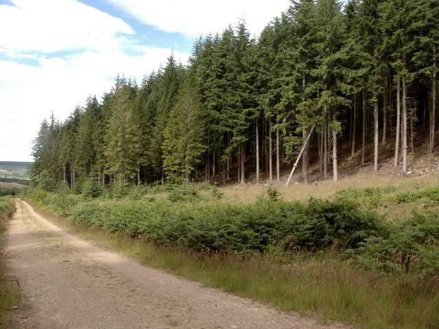 Track in Bennachie Forest