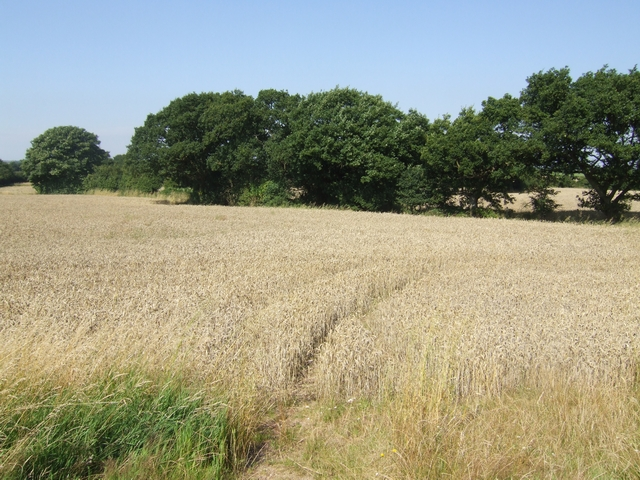 Farmland north of Pelsall Common North