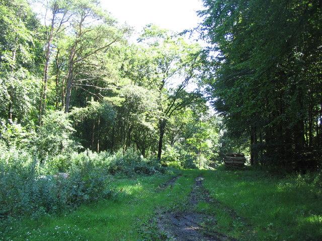 Permissive bridleway in Fontmell Wood