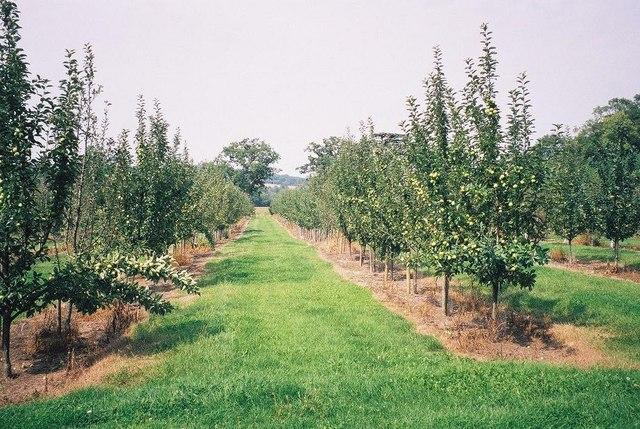 Leweston: orchard