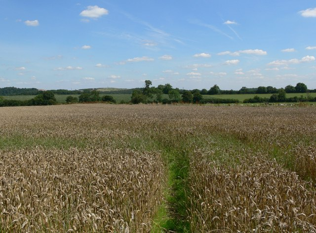 Crops north of Woodhouse
