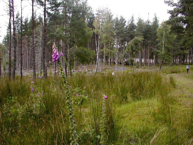 Forest, Alvie