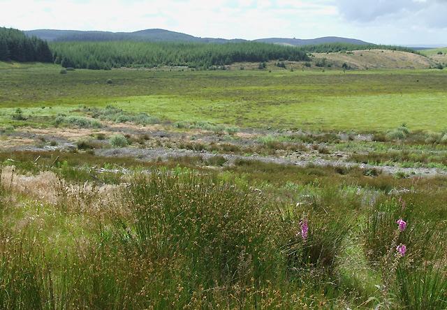 Elenydd Landscape across Figyn Blaenbrefi, Ceredigion