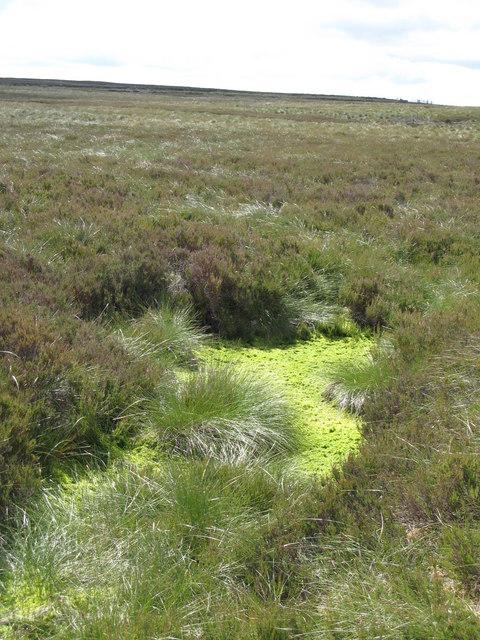 Slightly spongy ground below Cuthbert's Hill