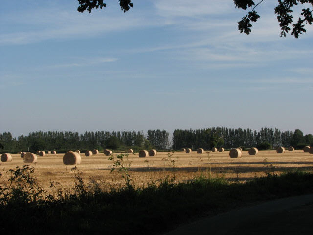 Farmland near Fir Tree Farm