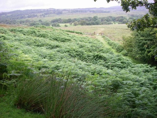 Old quarry track north of Moel Penderyn