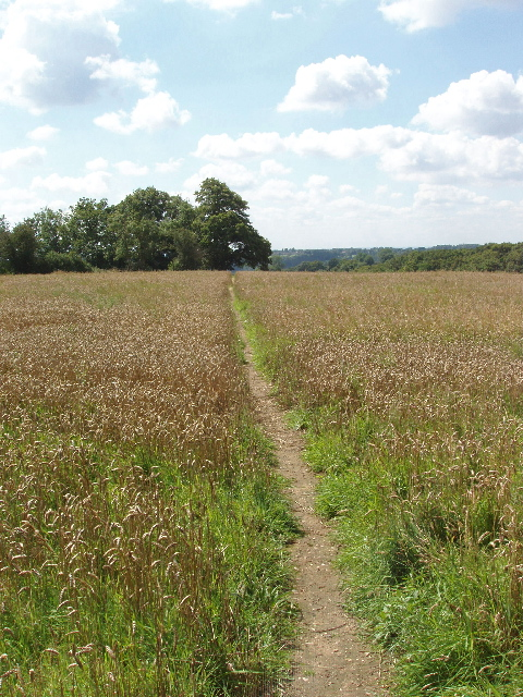 Footpath through wheat field below Penn