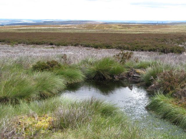Damp ground near Cuthbert's Hill