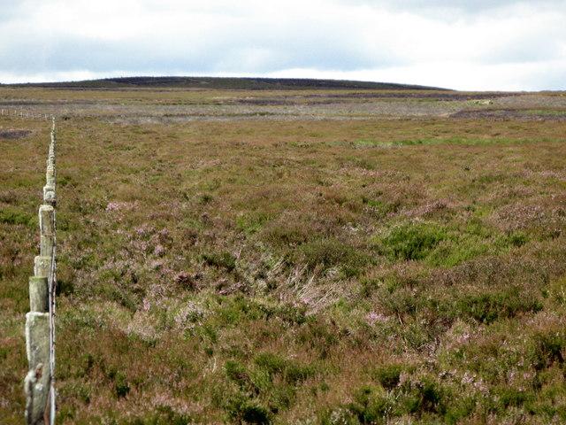 More moorland near Cuthbert's Hill