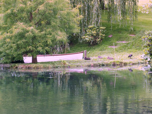 Ansty Pond