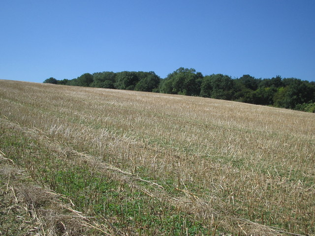 Firtree Hill and Wilstead Wood