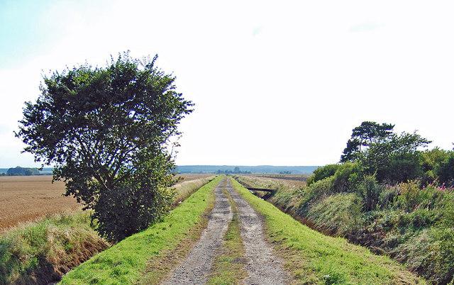 Track across Elsham Carrs