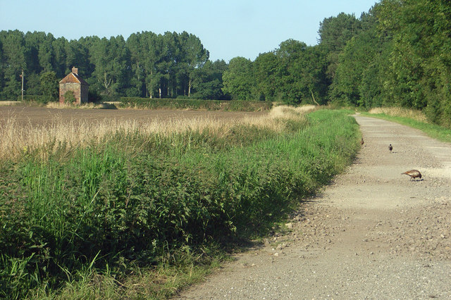 Near Rennison's Carr Farm