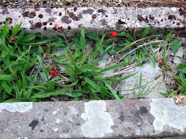 Fox-and-cubs among the graves