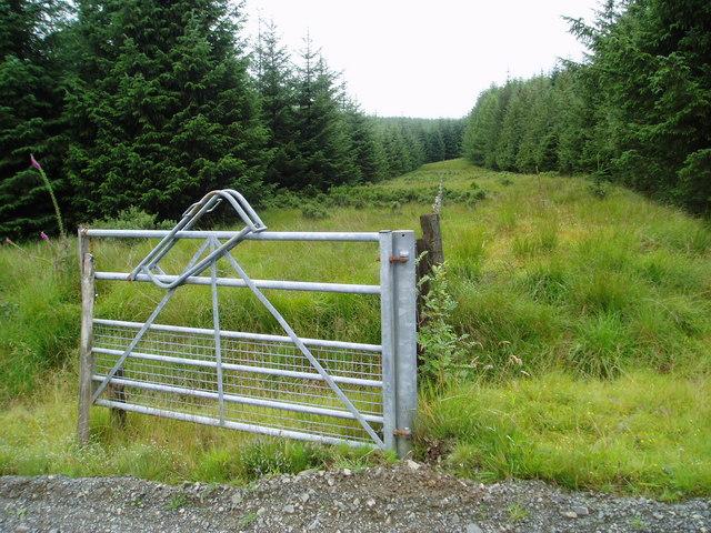 Old fence line, Margree Forest.