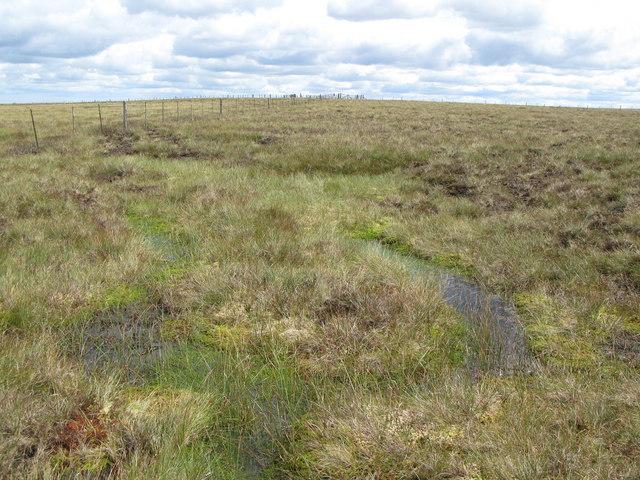 Spongy moorland above Redburn Edge