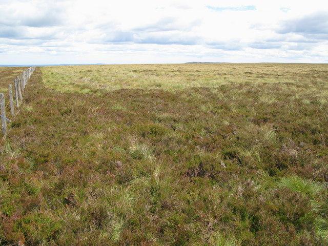 Moorland near Nookton Edge (2)