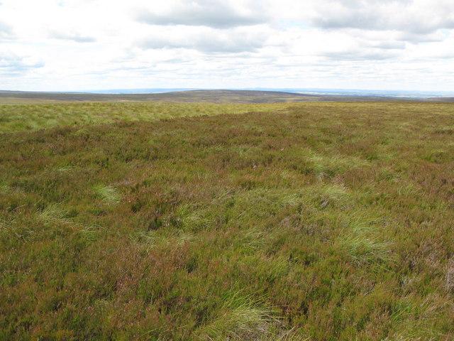 Moorland on Nookton Edge (2)