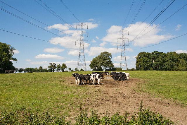 Pylons cross Purbrook Heath Road