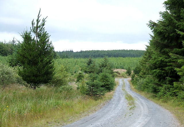 Forestry  Road near Llethr Hafodydd, Ceredigion