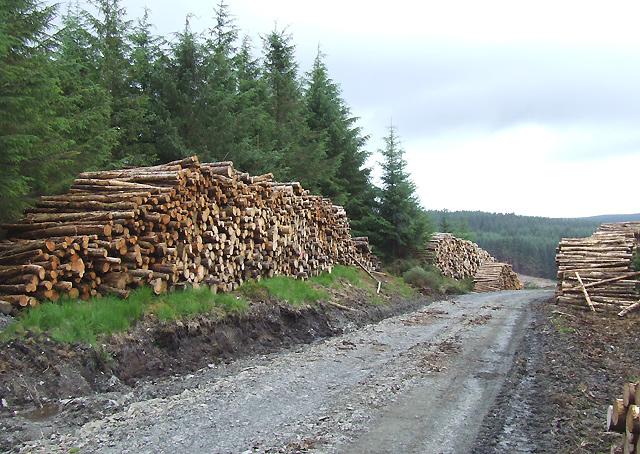 Forestry near Llethr Hafodydd, Ceredigion