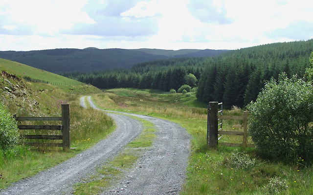 Forestry Road  north of Llether, Ceredigion