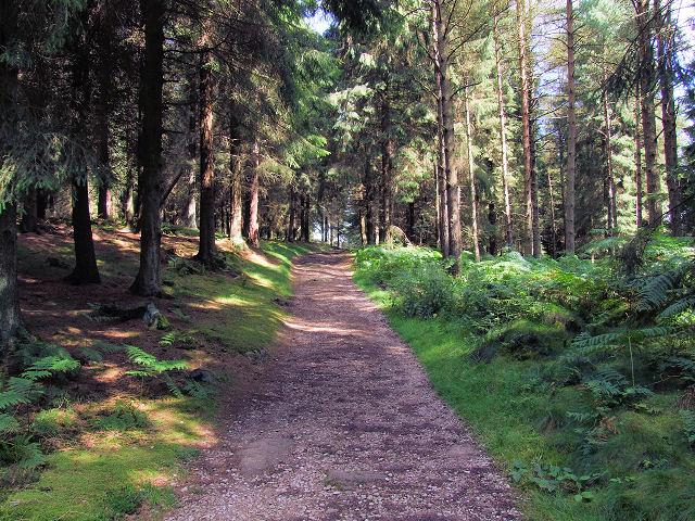Forest track, Sheepshaw Plantation