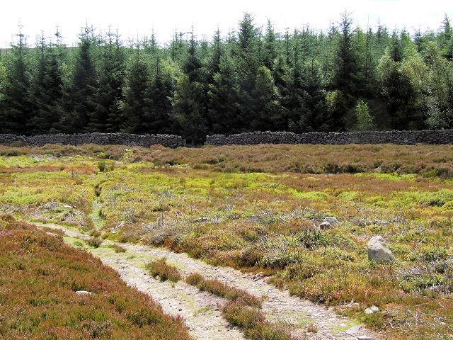 Laund Pasture Plantation