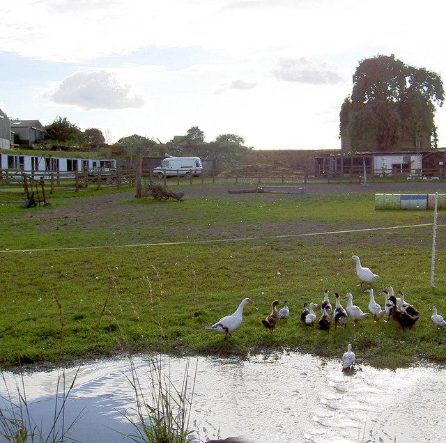 Duck pond.
