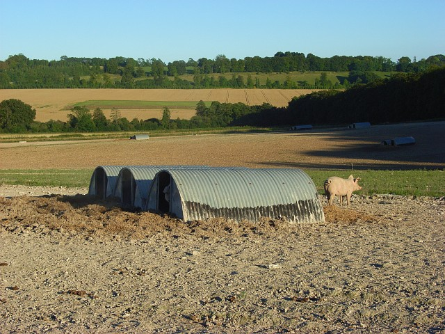 Pig farming, Winterslow