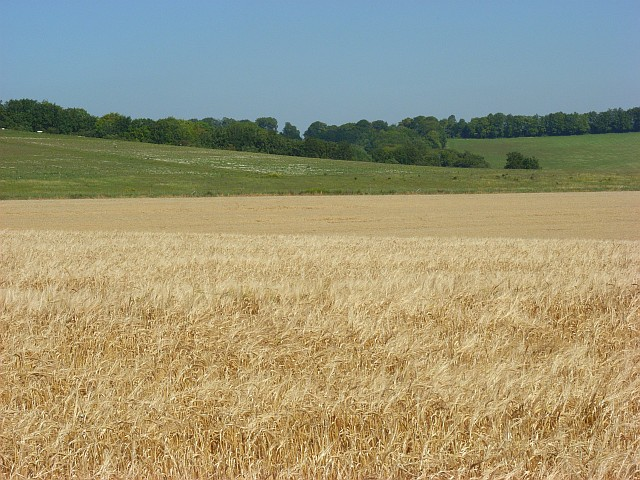 Farmland  and downland near Lopcombe Corner