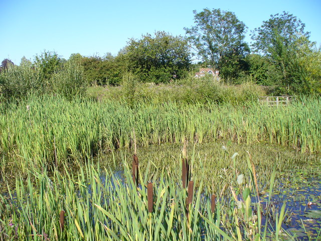 Bulrushes and Reeds