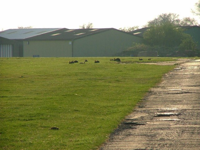 Rabbits on Booker Airfield