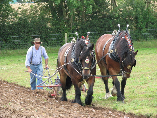 A pair of horses ploughing