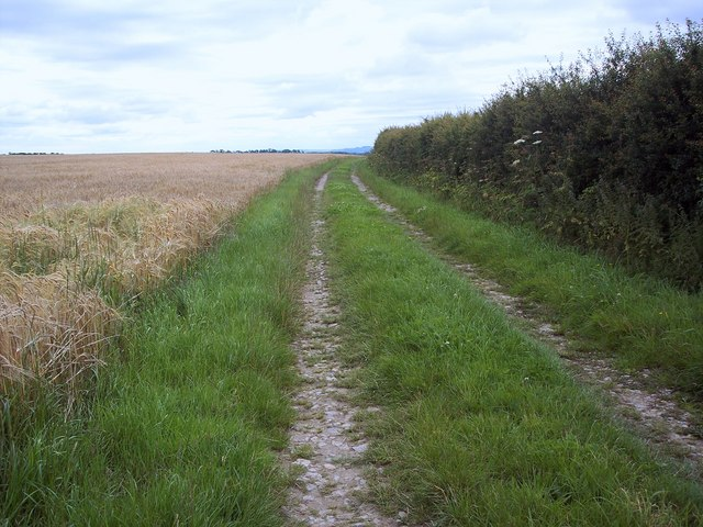 Field edge footpath, Great Barugh